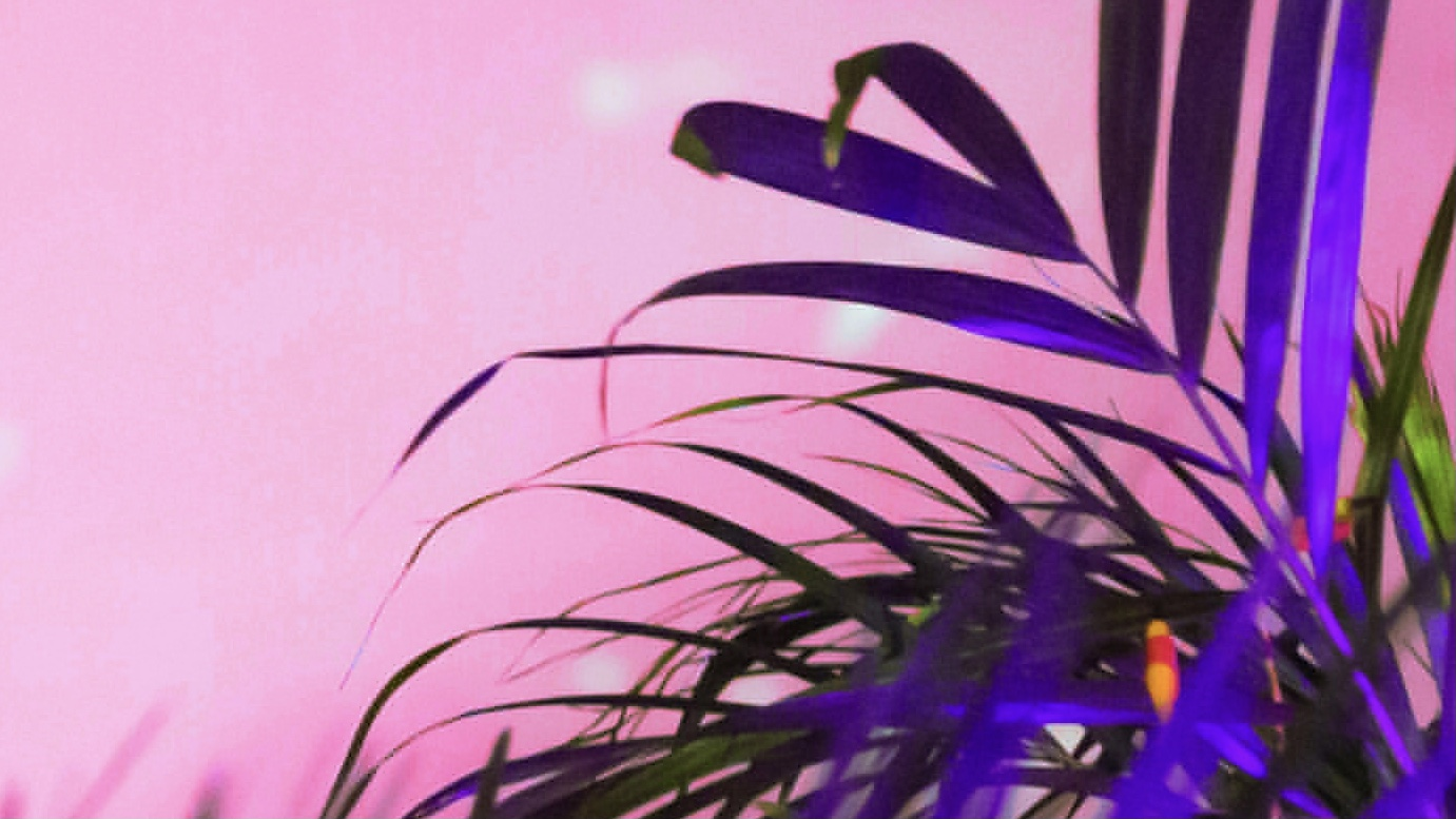 #11: Waterflower, Ariel, Flutuando Suspenso | RADIO