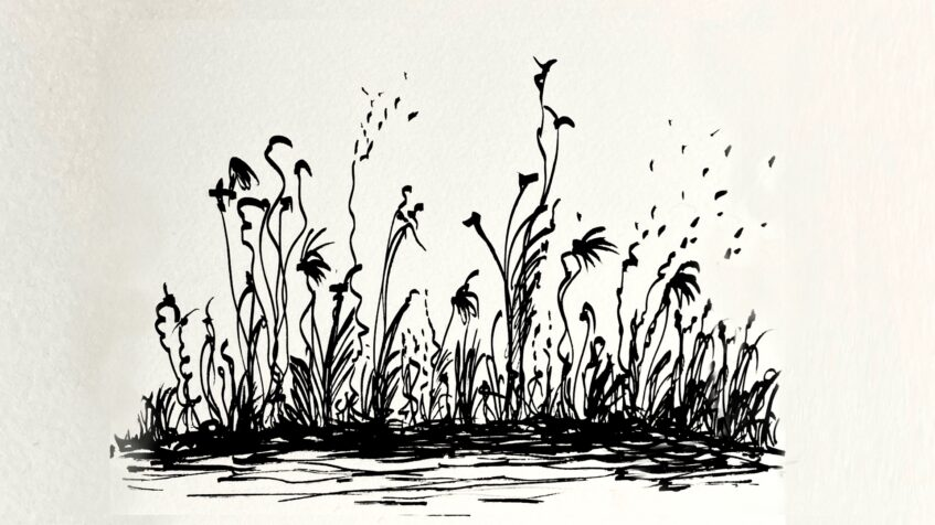 Nettles and Chalklines | Radio #18